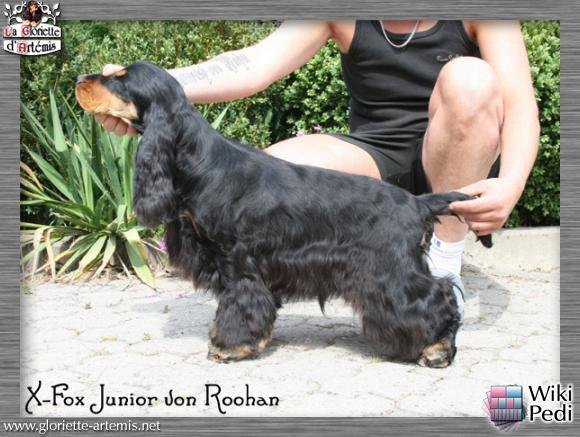 X-Fox Junior von Roohan